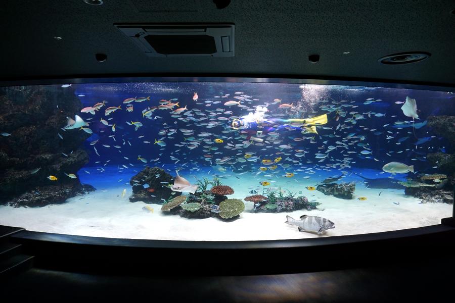 【悲報】サンシャイン水族館、うっかり酸素供給装置を止めてしまい大水槽内の生物の94%、1,235匹を死なす 残りはたった73匹  [597533159]->画像>95枚