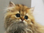【生活家電】犬や猫を飼っている人に!「ペット専用運転」を搭載した加湿空気清浄機