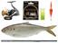 20cm超えも! 出世魚「コノシロ」は釣り方簡単、手応え抜群、食べておいしい