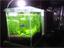 """高性能&グッドルッキングな""""小型水槽""""でアクアリウムを始めよう♪"""