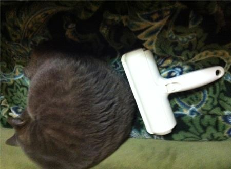 慣れればネコちゃんの横でお掃除も