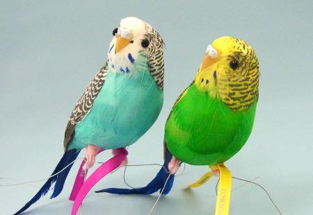 「Artificial Birds」。筆者はグリーンとブルーの発色がきれいなセキセイインコを飼いはじめ(?)ました