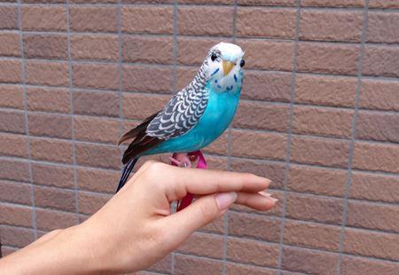 """鳥らしく""""ピーコちゃん""""と命名"""