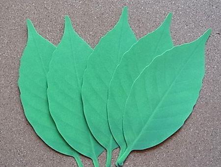 Lはパッケージの中に5枚の「Leaf」が、Sは8枚入りです