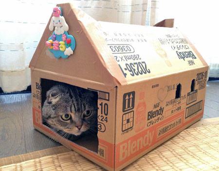 表札(?)を飾って、三角お屋根の猫ハウスの完成♪ 筆者宅の猫もまんざらでない様子