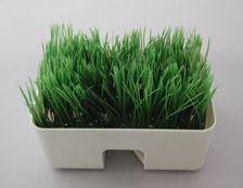 見た目は植木鉢にちょっと長い芝生が生えているような感じですね