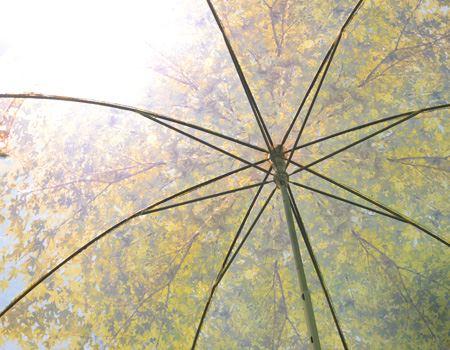 傘の内側。どことなくマイナスイオンを感じる(ような気がする)