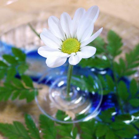 器を変えて清涼感をアップ! 白い花は落ち着いた印象を受けます