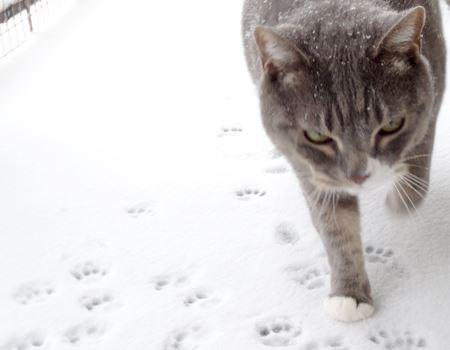 雪が積もったら絶対にこれを履いて、猫さんと一緒に近所を徘徊しようと、今から目論んでいます♪