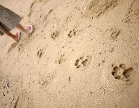 そして、夏はビーチで!
