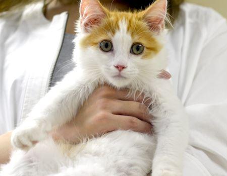 あ、これは1000年に1匹のイケ猫ですわ