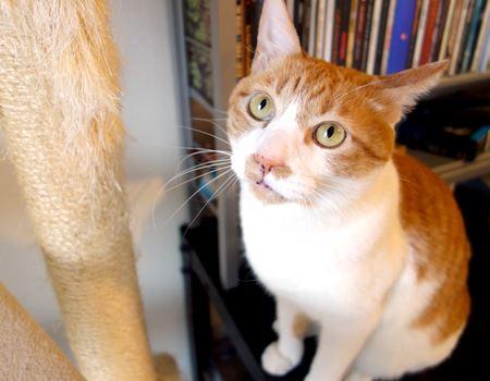 「いつでもどこでもとぎますよ。爪は猫の命ですから」