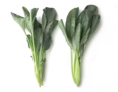 小松菜の例。左がそのまま野菜室で保存したもの。1日でこれだけへたってしまいましたが、グリーンセーバーで保存しておいた右側の小松菜はまだまだ新鮮そう!