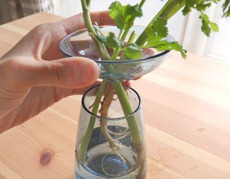 お皿の部分をそのまま持ち上げれば、繊細な葉や茎に触れずに下のお水の交換が可能です