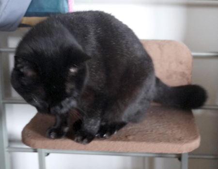 購入初日から乗ってくれた黒猫の胡麻