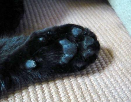 黒ネコのゴマちゃんは、そりゃもう真っ黒肉球です