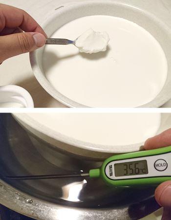 牛乳にヨーグルトを入れ、35度前後で発酵させます。40度以下をキープすることがポイント