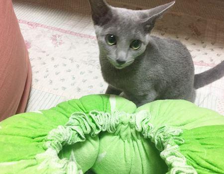 友人の猫ちゃんにご協力いただきます。さっそく興味津々