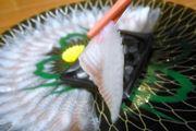 世にも珍しい「うなぎの刺身」。食感はふぐの刺身にそっくりだった!
