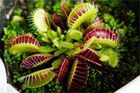 """検証! """"食虫植物""""を育てたら夏の虫対策になるのか?"""