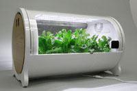 家庭菜園の新時代。IoT水耕栽培機「foop Lite」でレタスを作ってみました