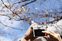 レンズ付きで5万円以下! タッチ操作で簡単に撮れる一眼カメラ5機種