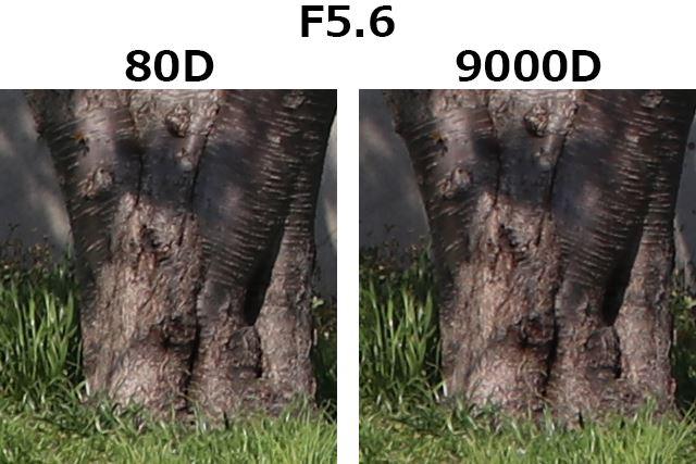 F5.6、1/800秒、ISO100