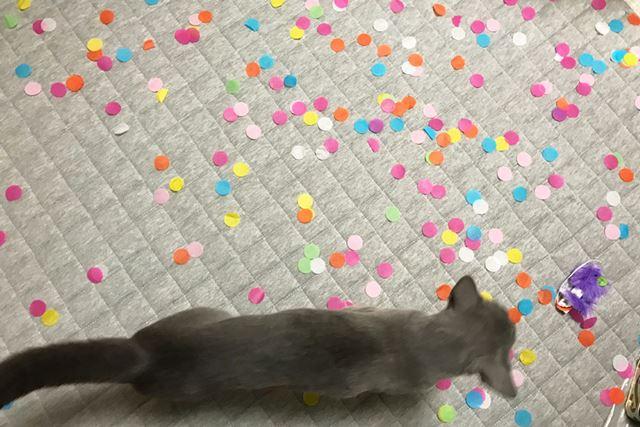 猫が興味を示す前に片付けました