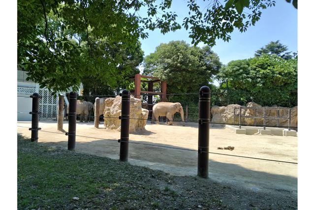 柵から離れたところに動物がいて「よく見えない」となるのは動物園あるある