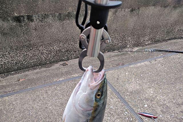 釣った魚の重さがわかる!