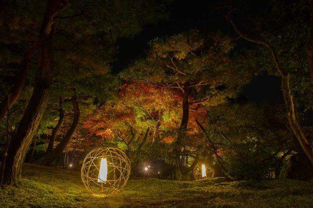 あくまでイメージですが、樹木をライトアップするとキレイですよね
