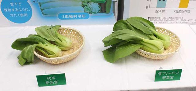 従来の野菜室で保存したもの(左)と比較すると、チンゲン菜もこんなに鮮度が違います