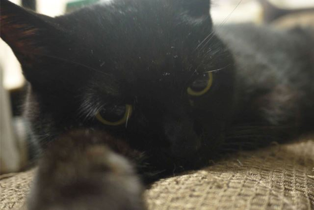 我が家の黒招き猫ゴマも右前足を伸ばして家内安全を見守ってくれている…はず…