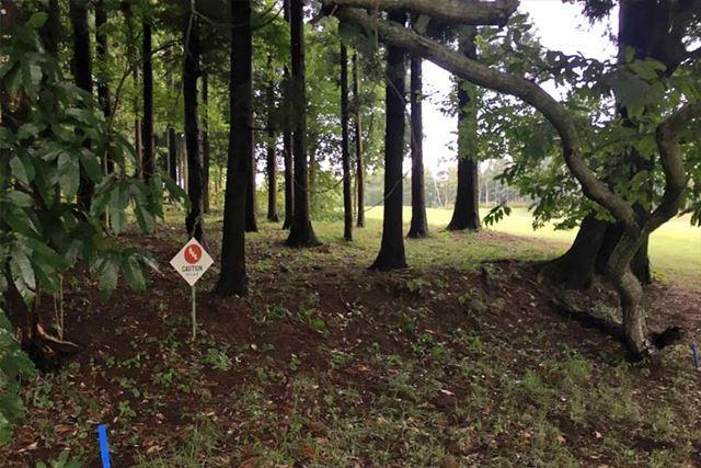 林に打ち込んだがピンはどの方向なのかわからない…というのはよくあるケース
