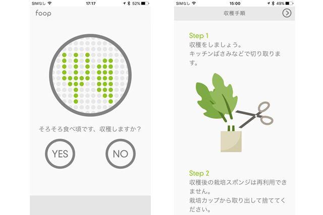 ついにやってきた収穫のとき。アプリで収穫の手順を説明してくれるので助かります