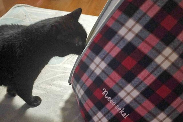 黒猫のゴマがおそるおそる中の様子をうかがって…