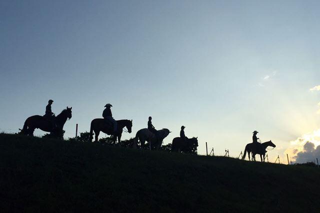 今回訪れた「中伊豆ワイナリーヒルズ」の乗馬イメージ