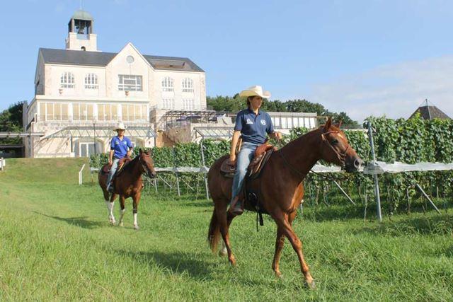 中伊豆ワイナリーヒルズでは体験乗馬もできる