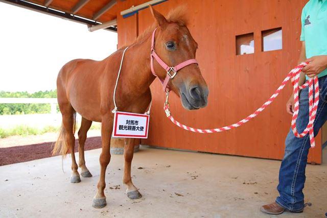 長崎県の対馬から来た対州馬の優香ちゃん