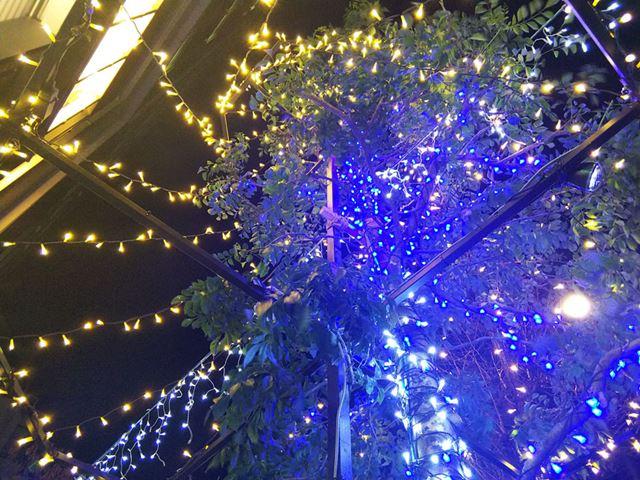 イルミネーションで彩られた街路樹を下側からパシャリ。黒い夜空部分にはノイズが少し発生した