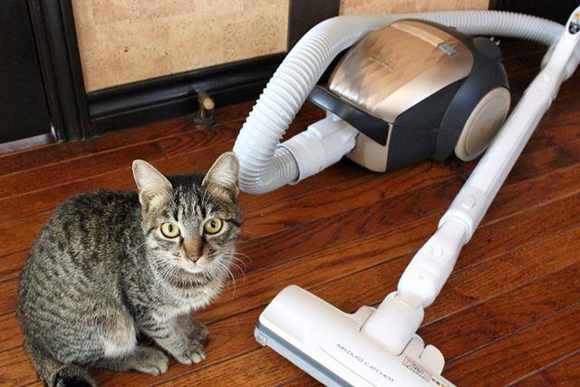 猫を飼っている家におじゃまして、掃除機がけさせてもらいました!