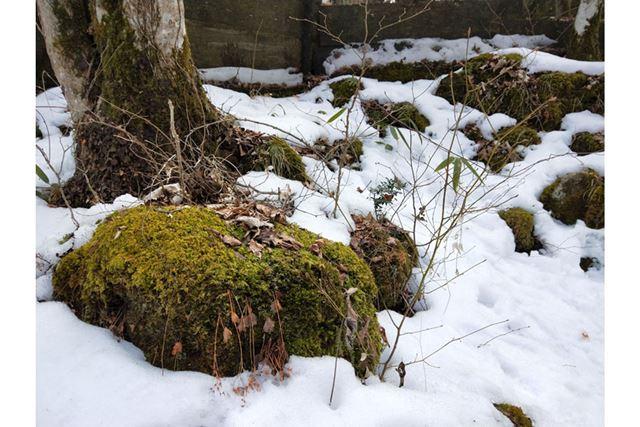 岩に生えたコケや、雪の微妙な質感もしっかりと再現できている