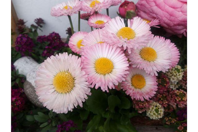 少しアンダー気味だが、花が持つやわらかな色味を壊すことなく自然に再現