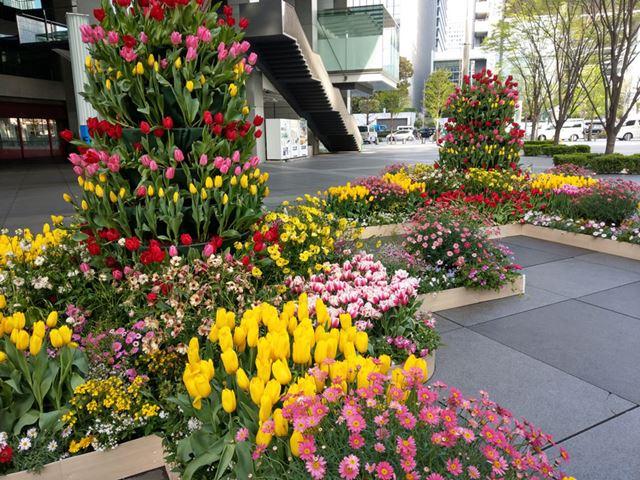 ガーベラやチューリップなど色とりどりの花を撮影。こちらも肉眼に近い色の再現性だ
