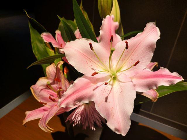 AIオートで花を撮影した1枚。花の撮影時は、コントラストが強くなり、はっきりとした色味を表現する