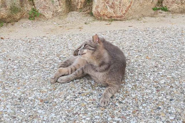 AIライブシャッターの撮影例。猫を動画撮影していたら、後足で首筋を搔いた瞬間にシャッターが切れた