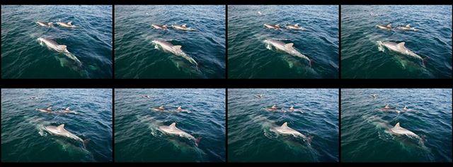 0.5秒の出来事の間に、8コマ撮れます。撮影の瞬間を逃さない高速連続撮影(最高16コマ/秒)