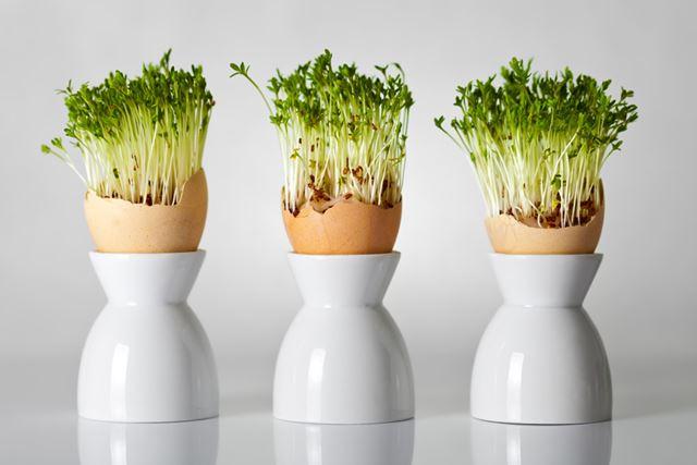 植物を育てるのもありかも