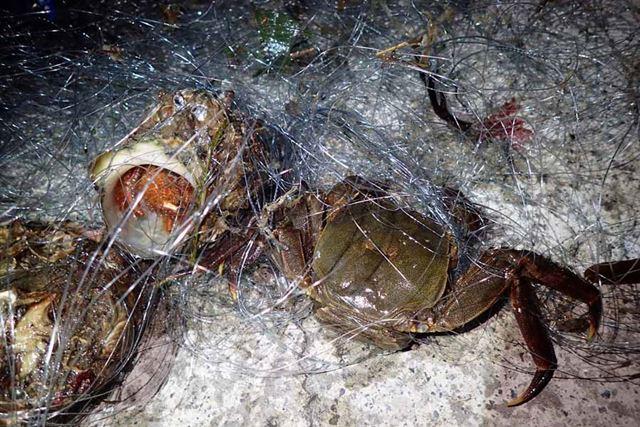 右がモクズガニで、サザエの殻に入っているのがオニヤドカリ。意外といろんな生物が釣れるのである