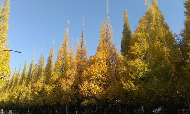 晴天の屋外の風景を撮影。順光ということもありきれいに写った。ただし、木々の解像感は今ひとつ